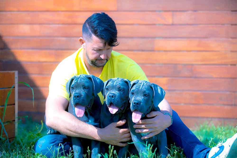 comprar cachorros de cane corso en Somosaguas y criadores de canecorso italiano en Madrid