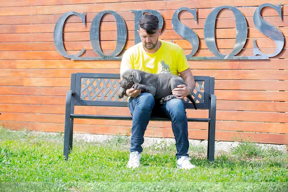 comprar cachorros de cane corso italiano en Pozuelo de Alarcón y Venta de cachorros de cane corso en Madrid