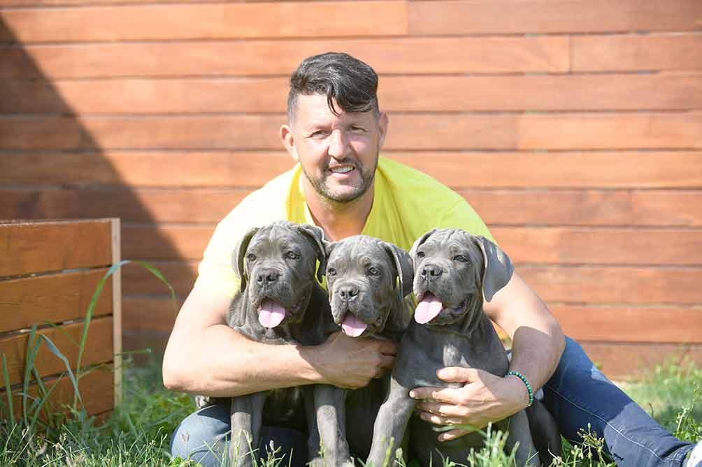 comprar cachorros perro Cane Corso en España