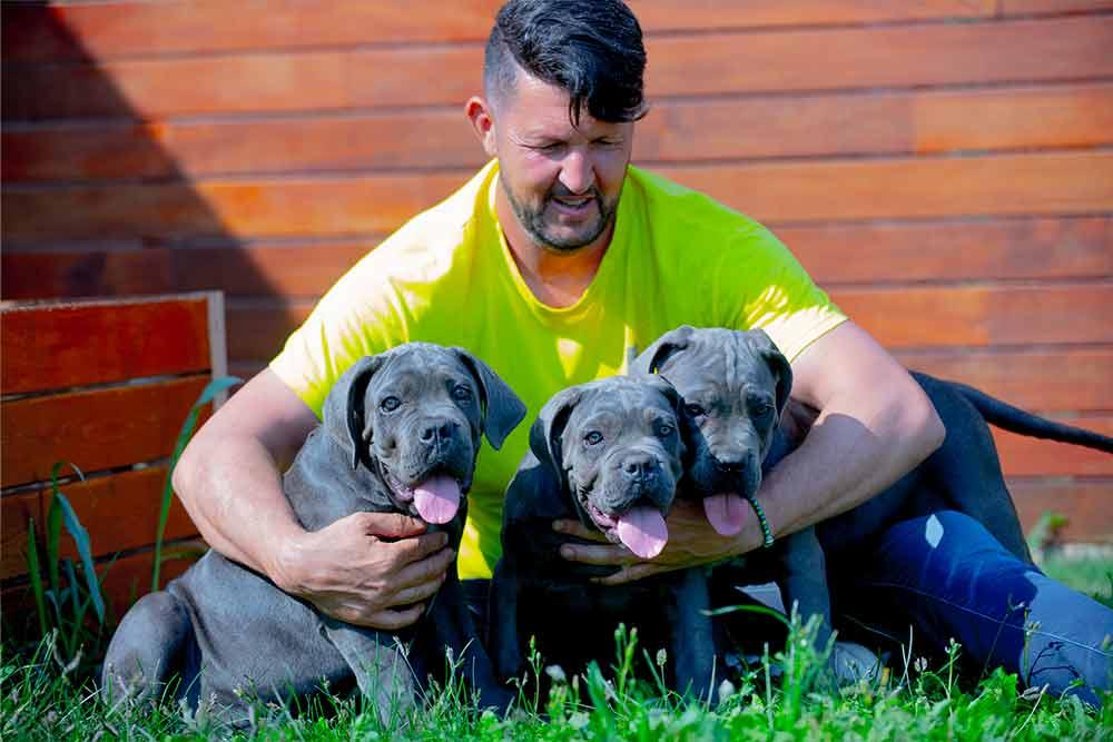 comprar un cachorros de Cane Corso campeón Mundial X-Man