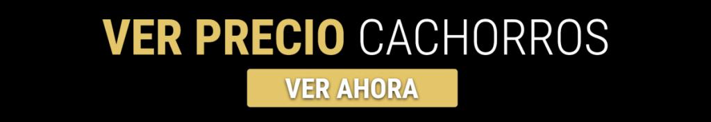 COMPRAR CACHORROS DE Cane Corso EN GRANADA