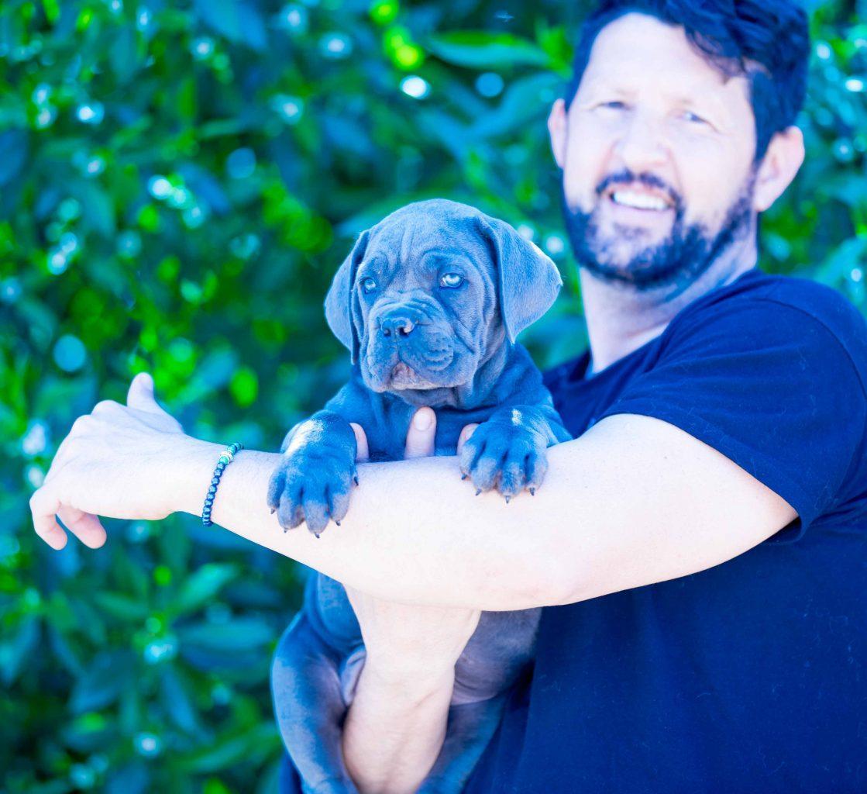 where buy cane corso and for sale Italian mastiff puppies in Delaware