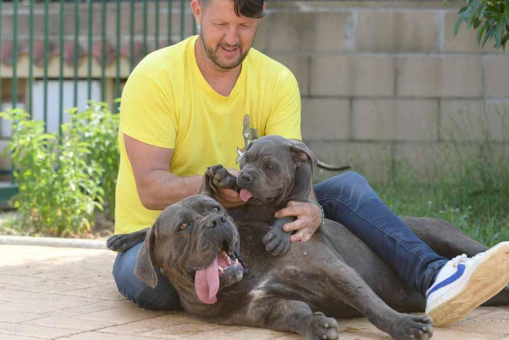 cane corso puppies for sale in Augusta and breeders of Italian mastiff in Maine