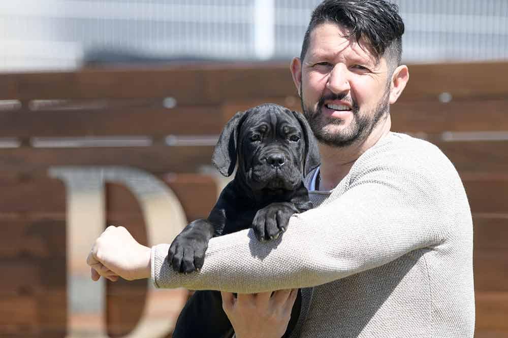 venta de cachorros de Cane corso-mastín Italiano en España