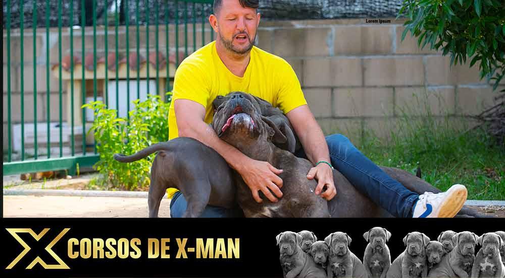 Venta de cachorros de Cane Corso Italiano en Torrevieja y Criadores de cachorro de Cane Corso en Alicante