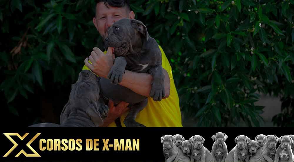 cane corso puppy for sale in Bozeman and breeders of Italian mastiff puppies in Montana