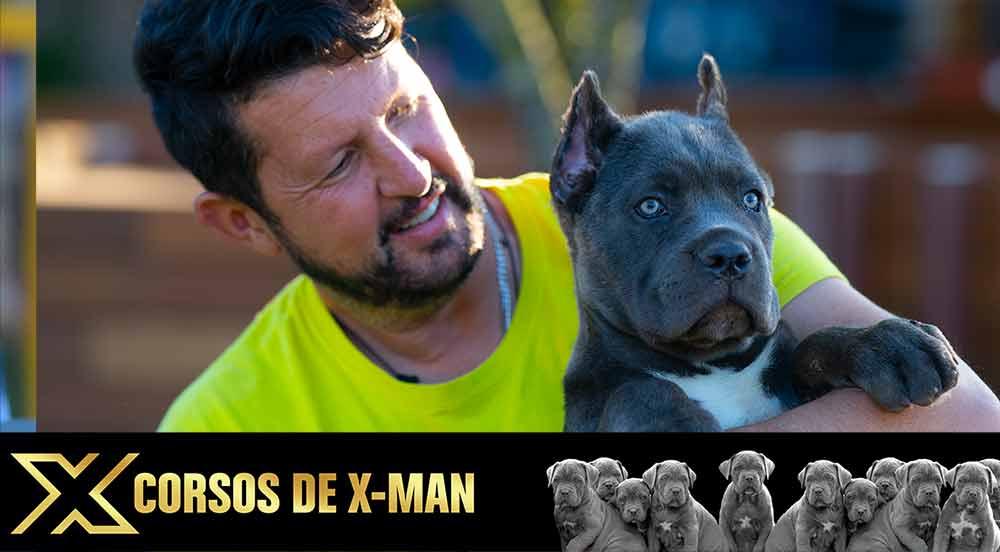 cane corso puppy for sale in Macon and breeders of Italian mastiff in Georgia